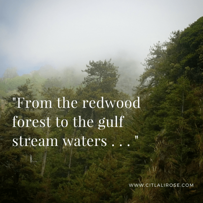 From the redwood forest to the gulf stream waters - this land is filled with scars.   thoughts on socially conscious parenting   Rosanna Alvarez of www.citlalirose.com