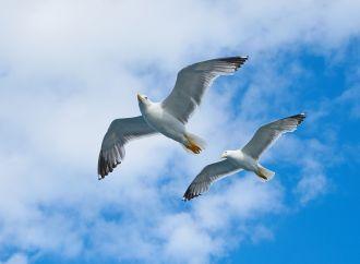A Citrix kiterjeszti az automatizált felhőalapú rendszerek lehetőségeit a vállalkozásokra