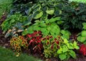 Florida gardening with green and red plants