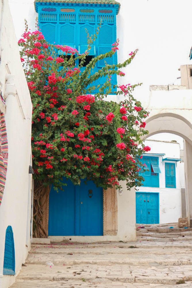 2017, travel, places to visit, africa, summer style, travelling to tunisia, tunisie, family vacation, blue, sidi bou said, hydrangeas, flowers, pink
