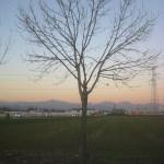 albero_stezzano