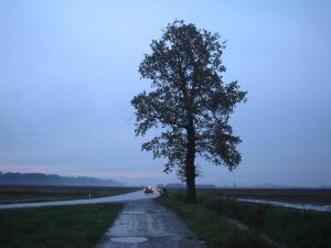 albero_proh