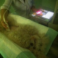 ultrassonografia1