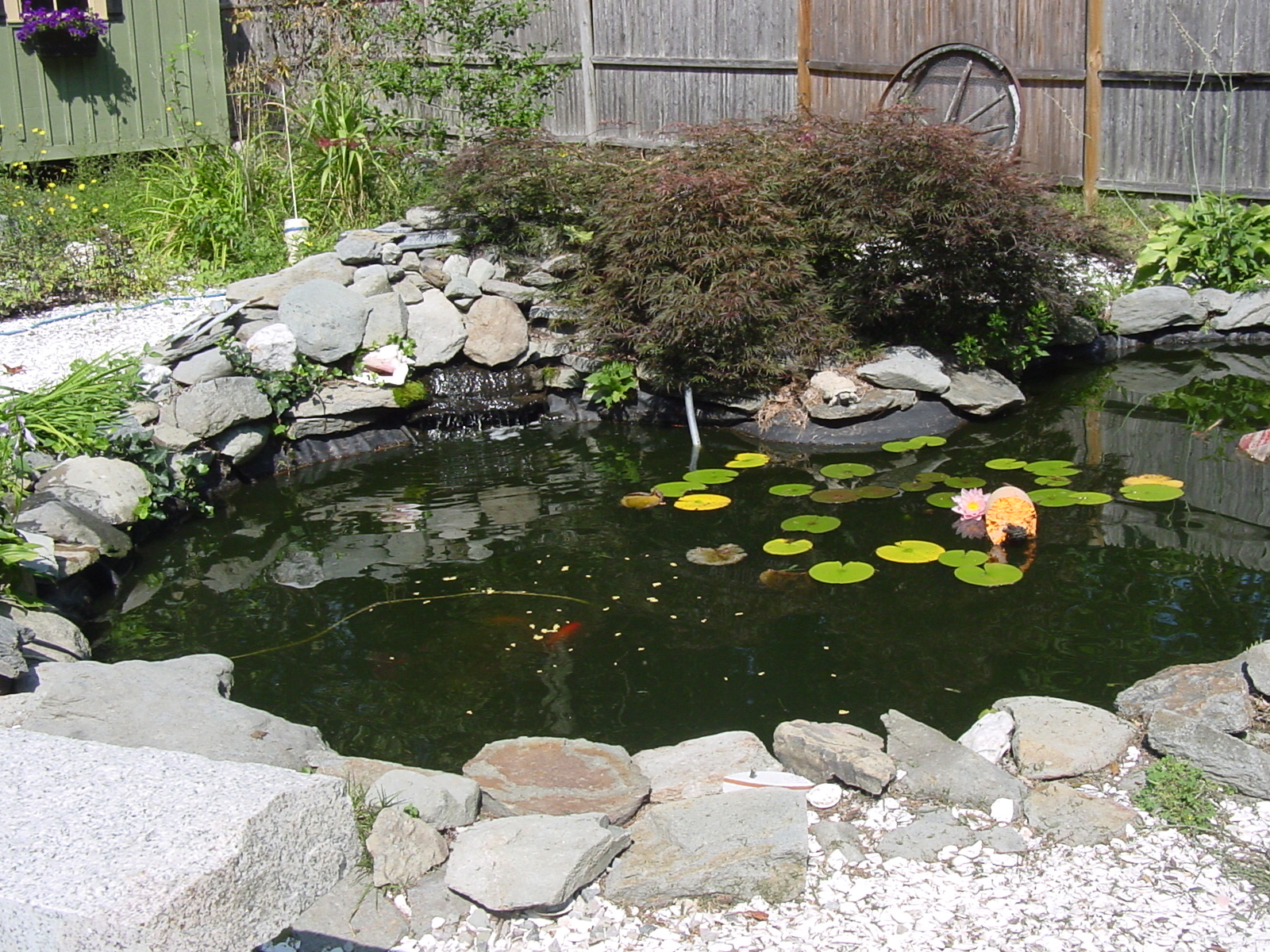 Pond Pix tp share? (squirrel, front yard, planting, weed ... on Front Yard Pond  id=52074
