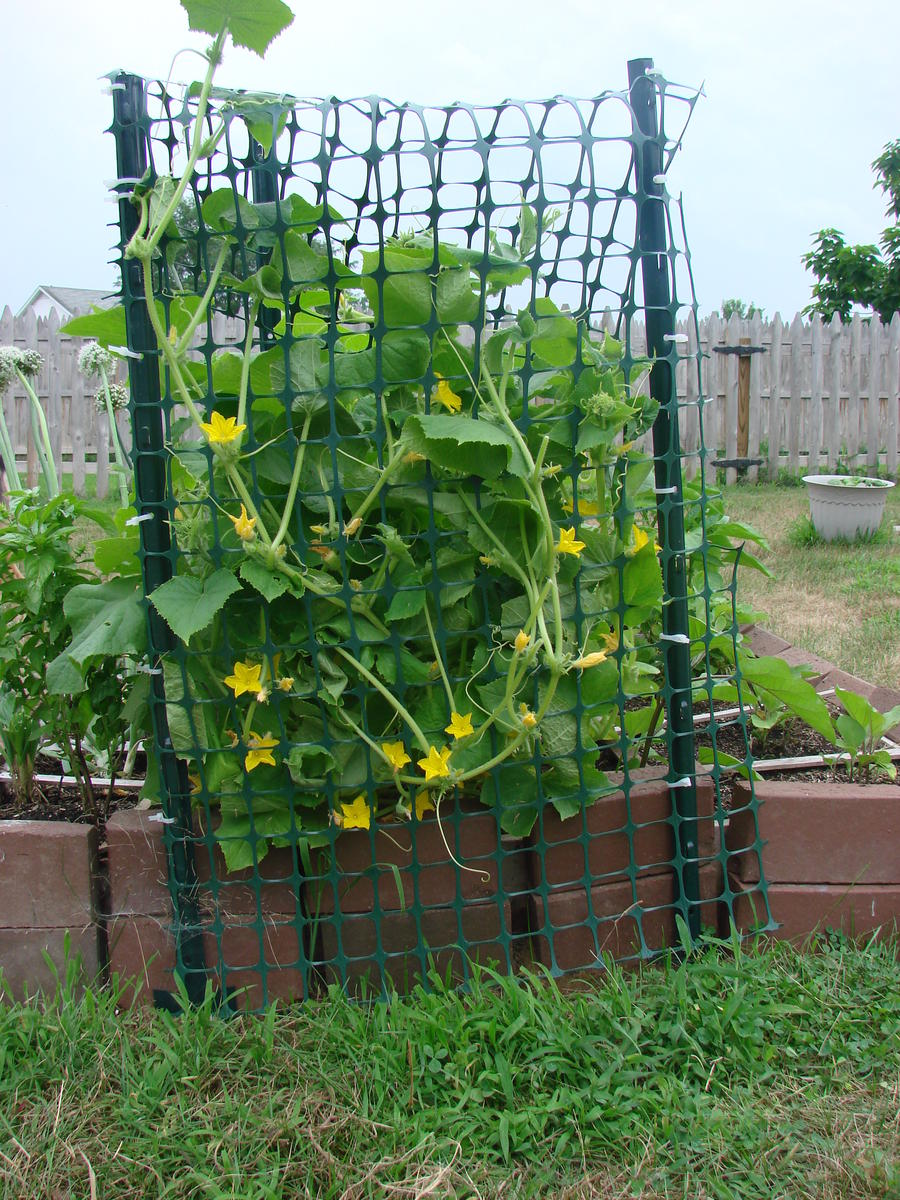 Image Result For How To Start A Vegetable Garden In Pots