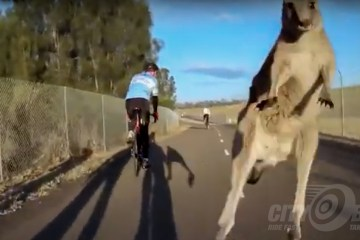 Cycliq Best of 2018 - Kangaroo!