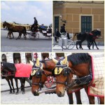 horses and horse-drawn carriage rides!