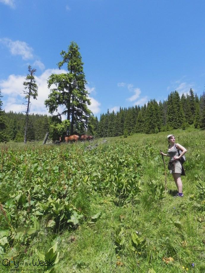 path through horses - Calimani Mountains