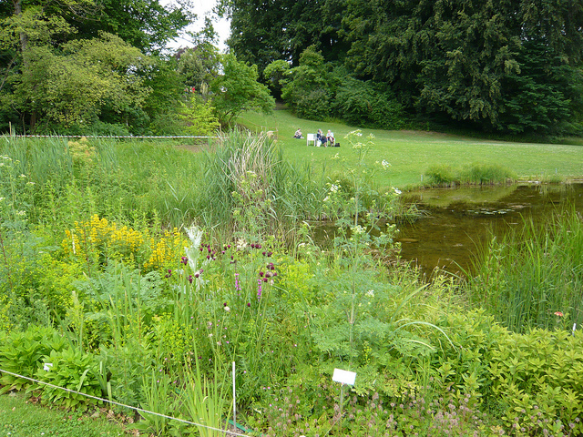 Zurich Botanical Gardens - image via Flickr by kafka4prez
