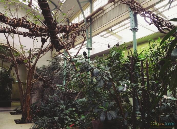 Monkey house at Artis Zoo