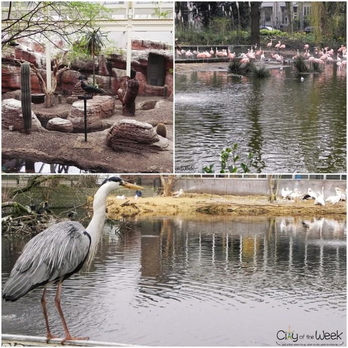 bird house and flamingos outdoors