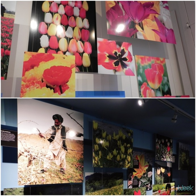 Tulip Museum Exhibition