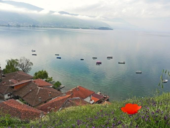 poppy and Ohrid Lake