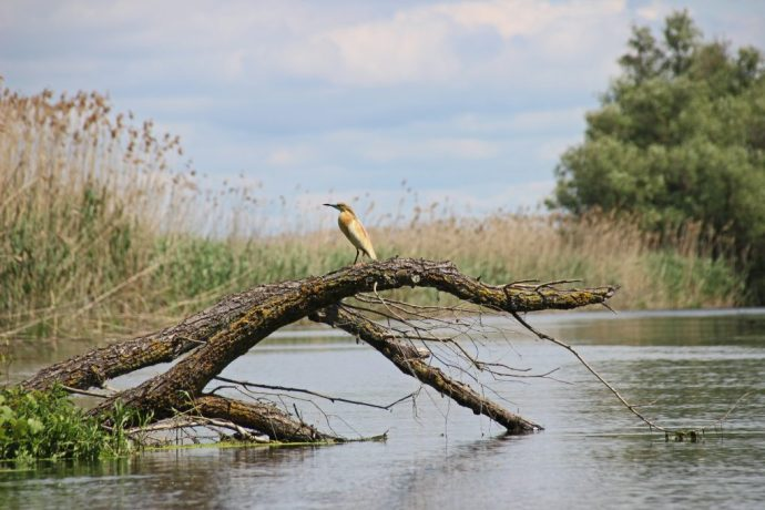 Squad Heron, Danube Delta, Romania