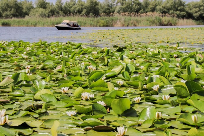 Boat Trip Danube Delta, Romania