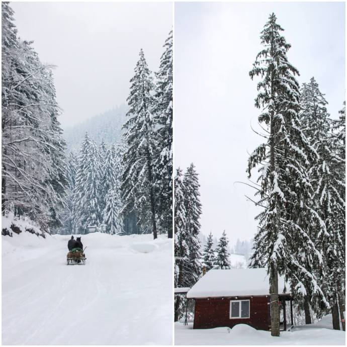 Bran Winter, Southern Carpathians, Romania