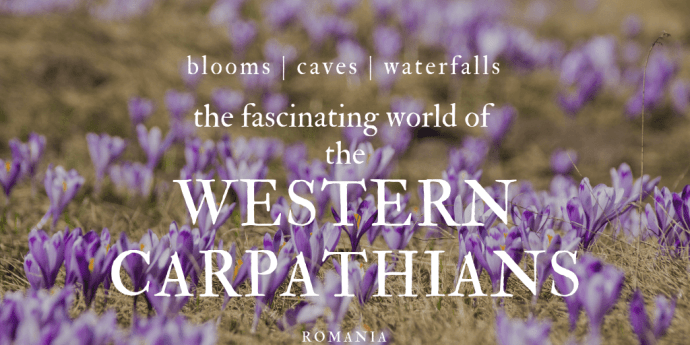 Western Carpathians in Bloom, Romania