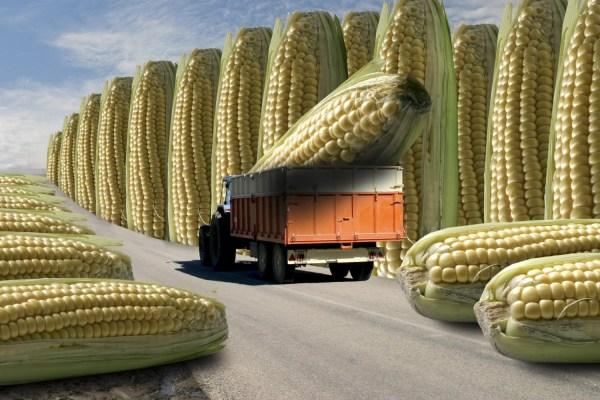 Что такое ГМО и с чем его едят?