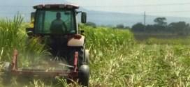 En Lara: Productores de seis municipios reciben 876 títulos de tierra