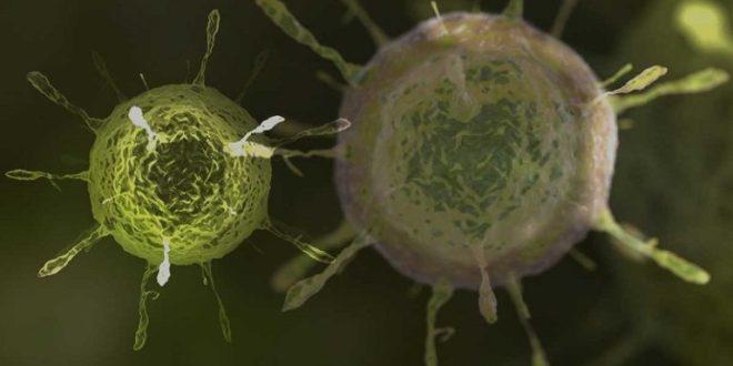OMS alerta sobre la presencia de una nueva variante del coronavirus llamada Lambda