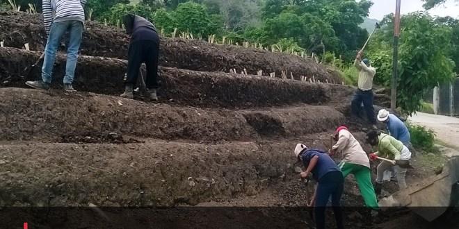 SIEMBRA DE VETIVER EN SANARE / Una técnica de terraza vegetal de bajo costo para la conservación de suelos y estabilización de vías terrestres