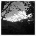 cer printre copaci