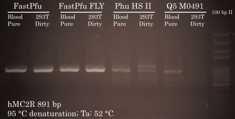 Permissive PCR Cycling conditions with FastPfu FLY