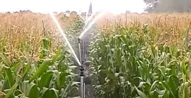 Sprinkler irrigation Advantages and Disadvantages - Types, Application