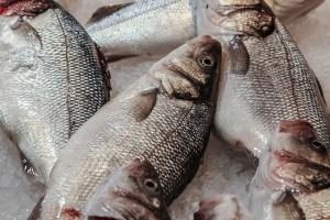 fish-428056_640