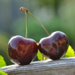APPLICATION FOR EXTENSION MADE AHEAD OF TIME REFUSED: AN UNREASONABLE SECOND BITE OF THE CHERRY