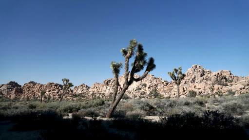 cjparis_Joshua-Tree_55