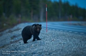 20090508_bear_cubs_0006