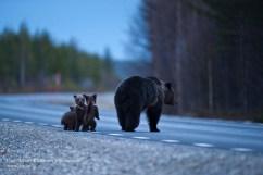 20090508_bear_cubs_0018