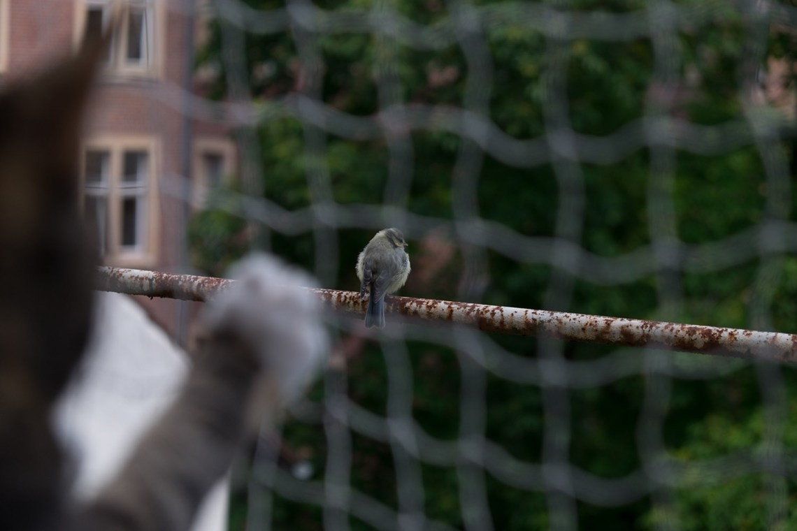 Ambar und der Vogel