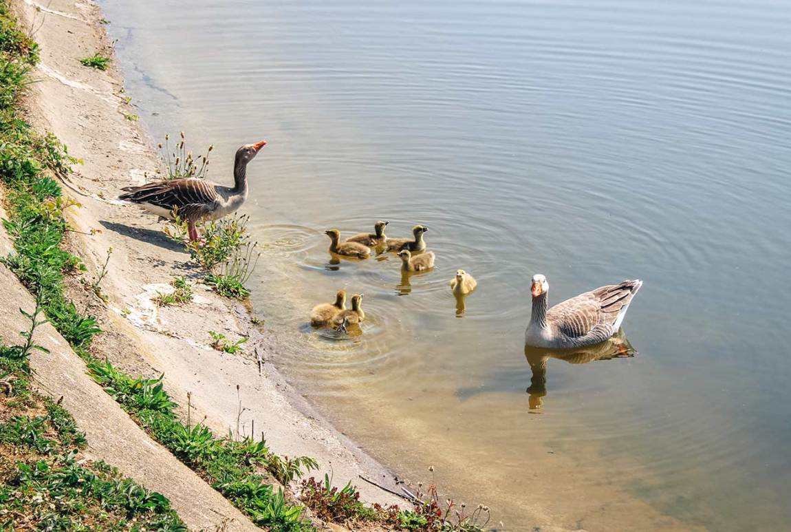 A Guide to Walthamstow Wetlands in London