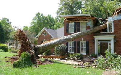 When good trees go bad.