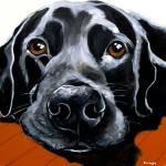 Pet Portrait | Brando | Claire Dunaway Studios