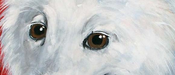 Pet Portrait Testimonial | Quita | Claire Dunaway Studios