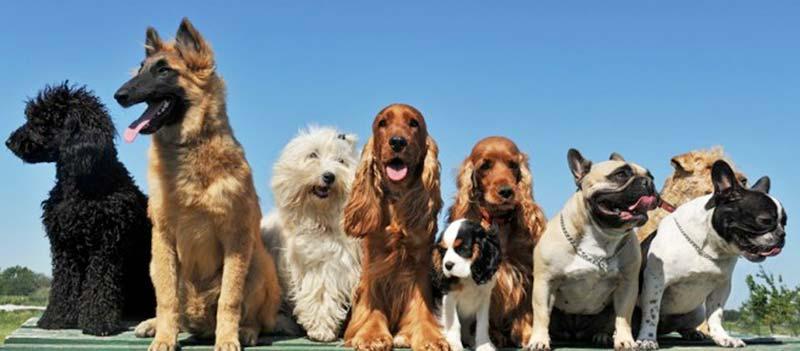 Cani-in-concorso