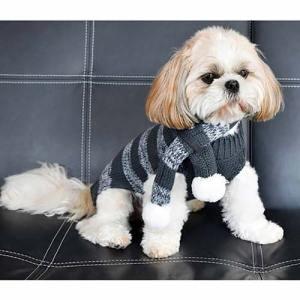Maglione-per-cani-foto