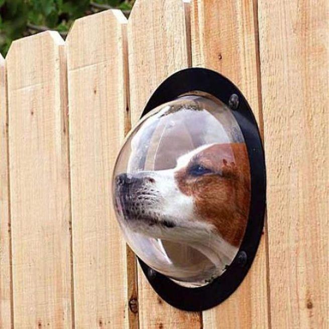 7. Esta janela para o seu cachorro ver o movimento da rua