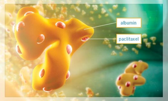 Abraxane, owned by Celgene, takes paclitaxel and binds it to a globular protein, named albumin. The albumin serves as a delivery vehicle, improving the transportation of the drug to the target cancer sites. (Credit: pancreaticcanceraction.org)