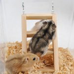 XIYAO Jouet en Hamster en Bois pour Hamster Nain Rat De Souris Petits Rongeurs-Longueur x Largeur x Hauteur: 5.9″* 2.75″ * 0.78″
