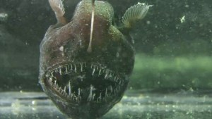 50 Shades of Anglerfish—Worst Sex Ever.