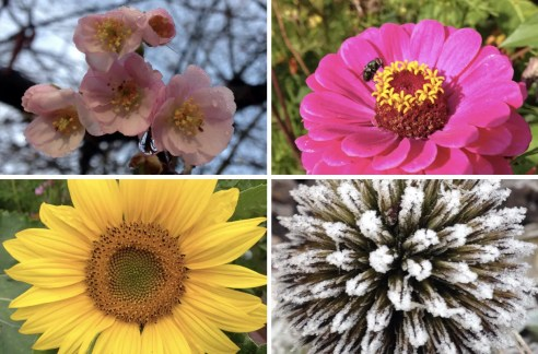 Bright and breezy: The Cynical Gardener captures the best of the season