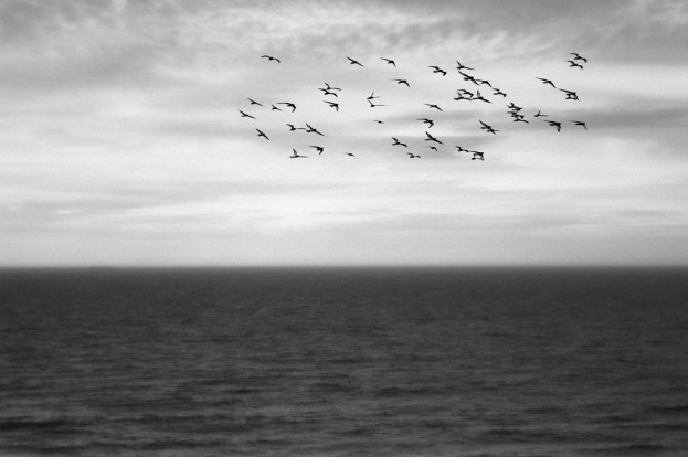 the birds by Clare Weeks