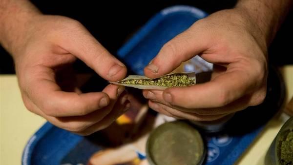 concentraciones THC componente psicoactivo cannabisAP CLAIMA20150316 0468 27 Despenalización de las drogas abre paso a la marihuana gourmet