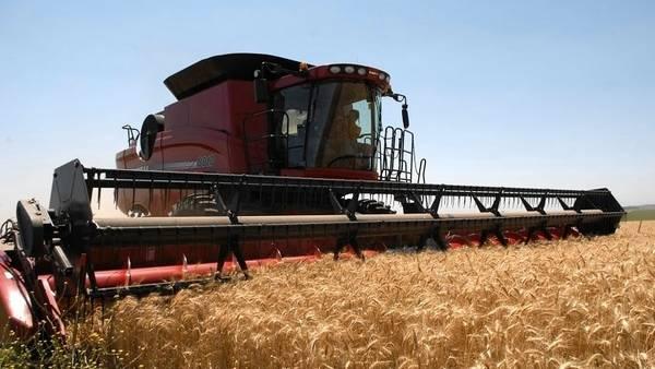 La siembra del cereal retrocedió en las últimas campañas. Que recupere protagonismo es clave para los números y la rotación.