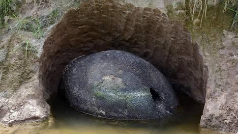 Resultado de imagen de gliptodonte