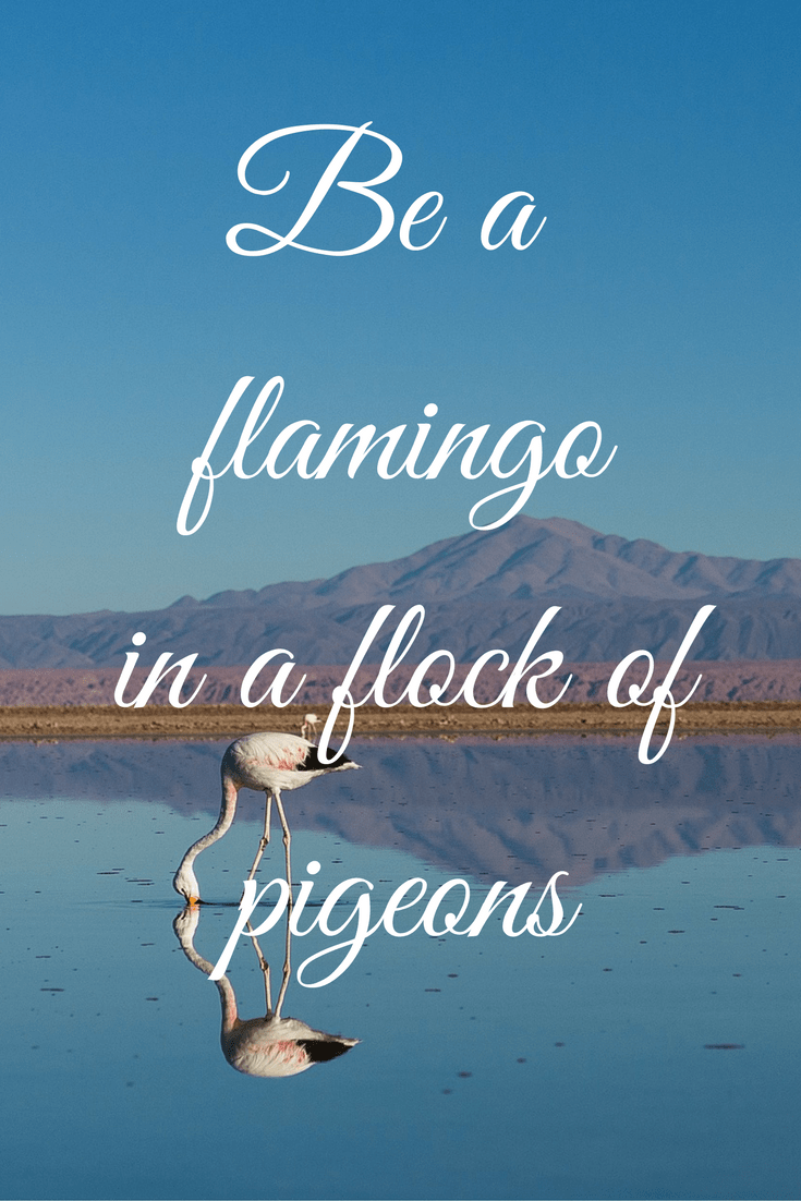 Be a flamingo quote